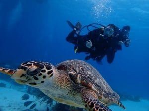 Woman diving with turtle in foreground