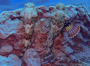 Read more about the article Cozumel Diving: Do Marine Animals Mate for Life?