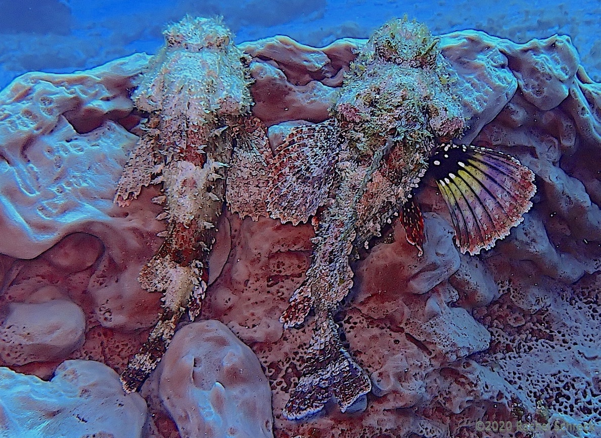 Cozumel Diving: Do Marine Animals Mate for Life?