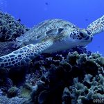 Sea Turtles in Cozumel: Full Guide to Cozumel's Sea Turtles