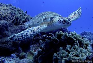 Read more about the article Sea Turtles in Cozumel: Your Full Guide