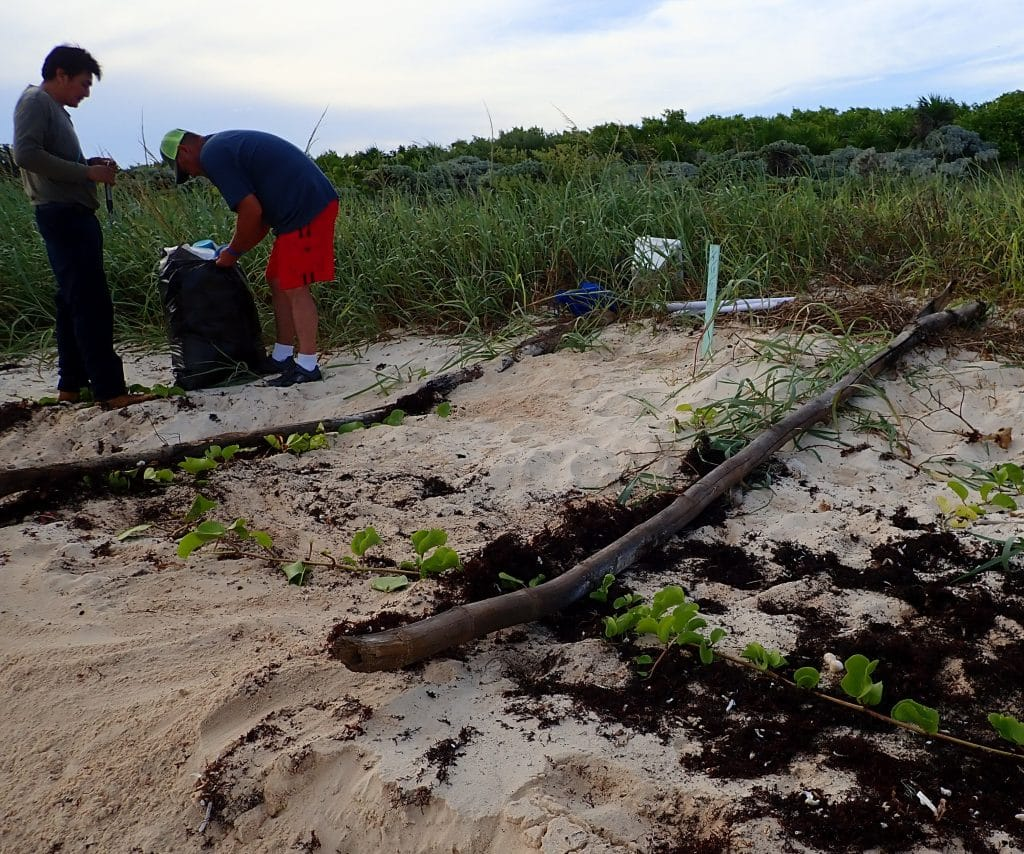 volunteers clear a path for the sea turtle hatchlings in Cozumel