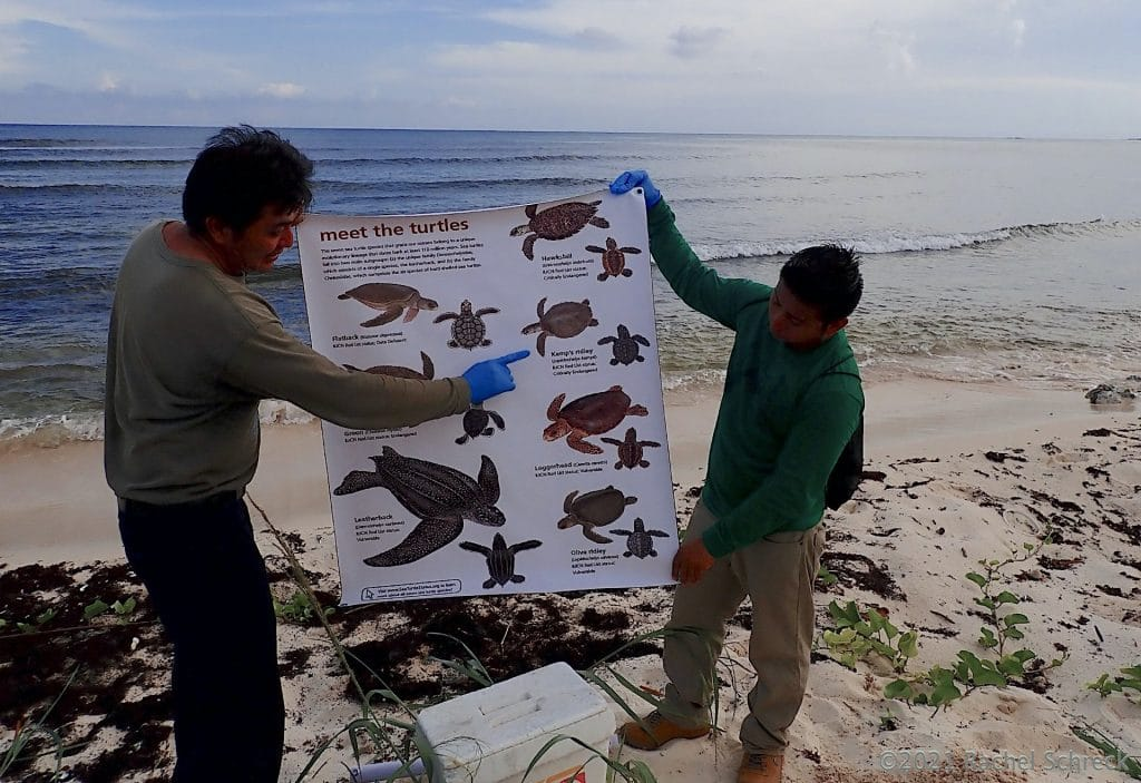 Cozumel ecology department science staff educating volunteers on local sea turtle population using graphic poster