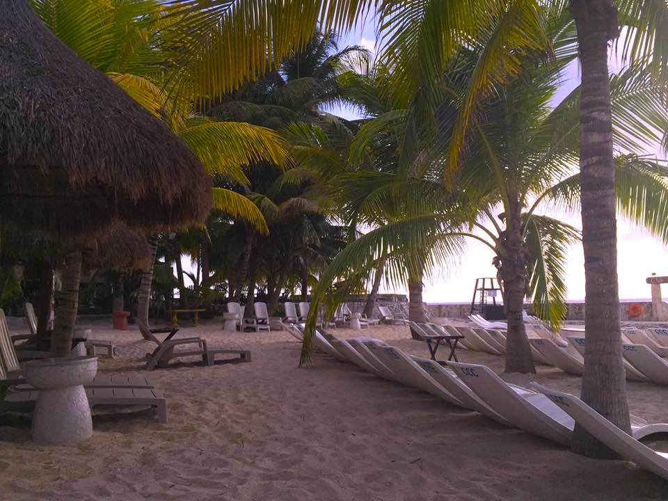 Beach club with lots of empty chaise lounges and palm trees