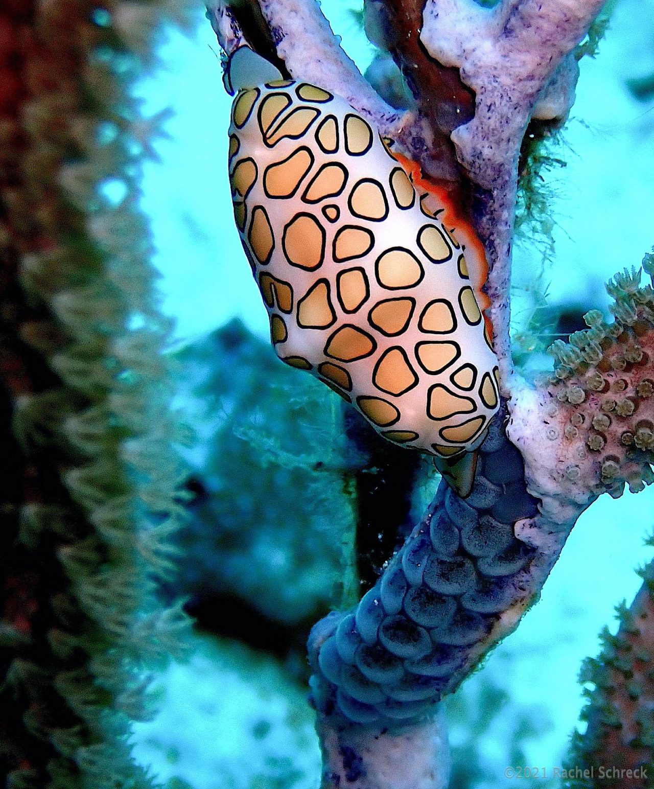 You are currently viewing Cozumel Marine Life: Eggs and Nesting Styles