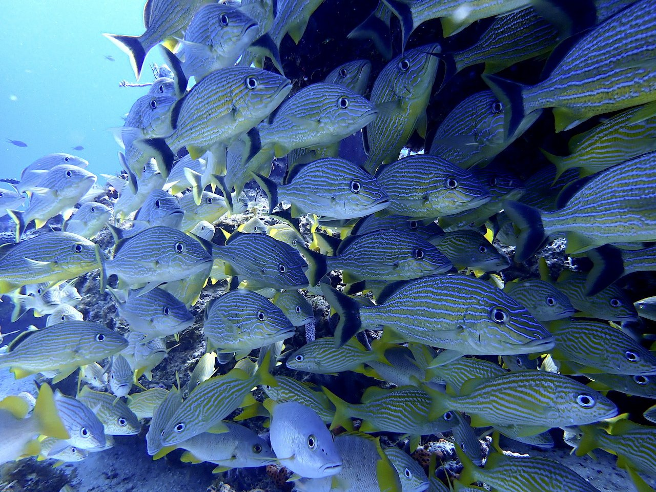 You are currently viewing Cozumel Snorkeling for Newbies: Your Top FAQs Answered
